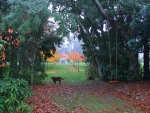 autumn-gazebo-avenue-with-dog