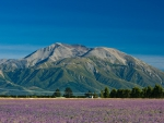 summer_on_the_canterbury_plains_with_view_to_mount_hutt